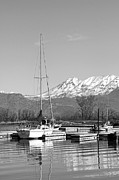 Mountains And Lake Prints - Sailboats At Utah Lake State Park Print by Tracie Kaska