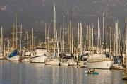 Kayaking Posters - Sailboats Docked In The Santa Barbara Poster by Rich Reid