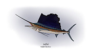 Game Fish Drawings Framed Prints - Sailfish Framed Print by Ralph Martens