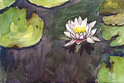 Waterlily Prints - Sailing Bloom Print by Christine Kane