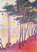 Sail Boats Posters - Sailing Boats and Pine Trees Poster by Paul Signac