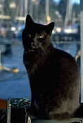 Black Cat Photos Photos - Sailing Feline by Elizabeth Coats