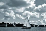 Pleasure Photo Originals - Sailing  Regatta by Terence Davis