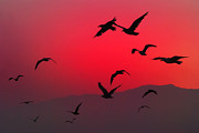Flock Of Bird Art - Sailors Delight by Denise Taylor