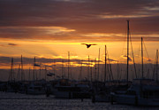 Sails At Sunset Print by Kelly Jones