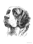 Animals Drawings Posters - Saint-Bernard-Drawing Poster by Gordon Punt