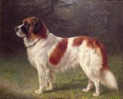 Brown White Dog Framed Prints - Saint Bernard Framed Print by Heinrich Sperling
