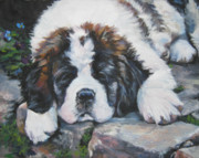 Dog Breeds R-s - Saint Bernard pup by Lee Ann Shepard
