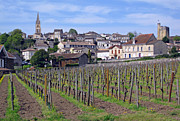 Sauvignon Posters - Saint-Emilion 1 Poster by Rod Jones