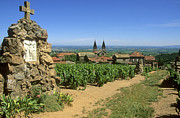 Wine Vineyard Photos - Saint Joseph en Beaujolais. France by Bernard Jaubert