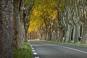 Avenue Art - Saint Remy Trees by Brian Jannsen