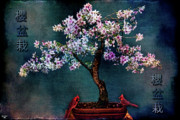 Chris Lord - SAKURA BONSAI