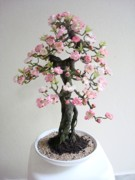 Blossom Sculptures - Sakura by Julio Cesar