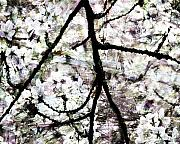 Trees - Sakura by Ken Walker