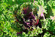 Minnesota Grown Metal Prints - Salad Maker Metal Print by Susan Herber