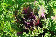 Salad Maker Print by Susan Herber