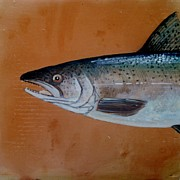 Fish Ceramics Metal Prints - Salmon 1 Metal Print by Andrew Drozdowicz