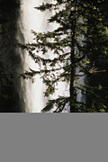 Fir Trees Posters - Salt Creek Falls, The Second Highest Poster by Phil Schermeister