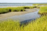Flocks Of Birds Prints - Salt Marsh Habitat With Flock Of Birds Print by Tim Laman