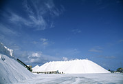 Gathering Photos - Salt Pan Industry by Alan Sirulnikoff