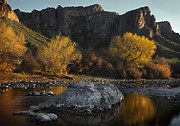 Yellow Leaves Framed Prints - Salt River Fall Foliage Framed Print by Dave Dilli