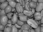 Nc Photographers Framed Prints - Salted Peanuts - Black and White - Photography Framed Print by Rebecca Anne Grant