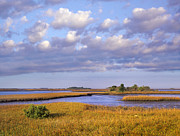 Cedar Key Framed Prints - Saltwater Marshes At Cedar Key Florida Framed Print by Tim Fitzharris