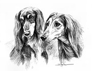 Dogs Drawings - Salukis by Barbara Walker