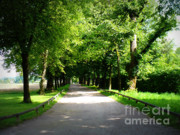 Tree-lined Posters - Salzburg Lane Poster by Carol Groenen