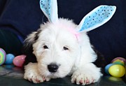 Easter Photographs Posters - Sam Poster by Kathleen Struckle