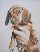 Puppy Drawings - Sambo by Karen Ilari