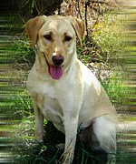 Labrador Digital Art - Sammie by Michelle Frizzell-Thompson