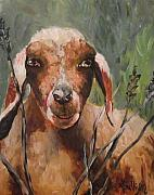 Goat Painting Originals - Sammy by Angela Sullivan