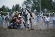 Rodeos Prints - Sammy F. Duval Wrestles A Steer Print by Bobby Model