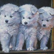 Pups Framed Prints - Samoyed Pups Framed Print by L A Shepard