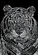 Cat Glass Art Framed Prints - Samson Framed Print by Jim Ross
