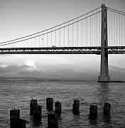 All - San Francisco Bay Bridge by Mandy Wiltse