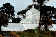 Golden Gate Park Photos - San Francisco Conservatory of Flowers at Golden Gate Park . 7D5849 by Wingsdomain Art and Photography
