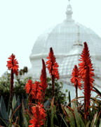 Golden Gate Park Photos - San Francisco Conservatory of Flowers in Golden Gate Park . 7D5799 by Wingsdomain Art and Photography