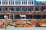 Tourist Attraction Digital Art Acrylic Prints - San Francisco Pier 39 Sea Lions . 7D14272 Acrylic Print by Wingsdomain Art and Photography