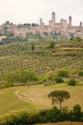 Olives Photo Posters - San Gimignano II Poster by Colette Panaioti