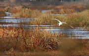 Water Bird Photos - Sanctuary by Donna Blackhall