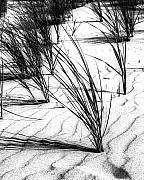 Hermesz Fine Art Art - Sand and Grass by Hermesz Fine Art