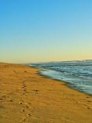 Sand And Sea Print by Liz Vernand