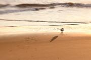 Lisa McStamp - Sand and Seagull