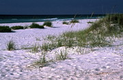 Gulf Breeze Posters - Sand Beach and Grass Poster by Sally Weigand