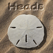 Sand Art - Sand Dollar Heads by Mike McGlothlen