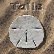 Sand Digital Art Posters - Sand Dollar Tails Poster by Mike McGlothlen