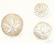 Coastal Art Posters - Sand Dollar Trio Watercolor Poster by Sheryl Heatherly Hawkins