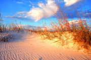 Sea Oats Metal Prints - Sand Dune and Sea Oats at Sunset Metal Print by Thomas R Fletcher
